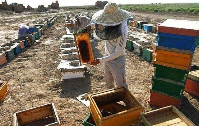 کوشش برای راه اندازی رشته زنبورداری در دانشگاه محقق اردبیلی، ارائه خدمات به خارج از دانشگاه