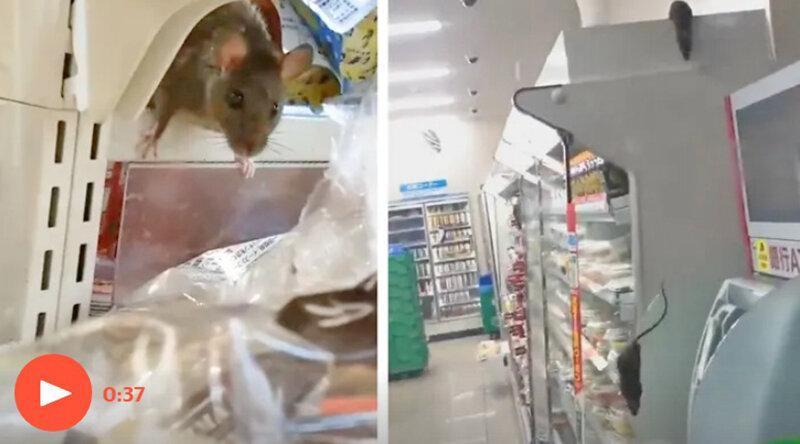 پنج میلیون بازدید از رژه موش ها در فروشگاه ژاپنی
